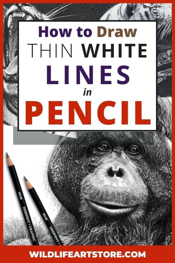 How to get white lines in a pencil drawing image for Pinterest. Male orangutan drawing and two tiger drawings.