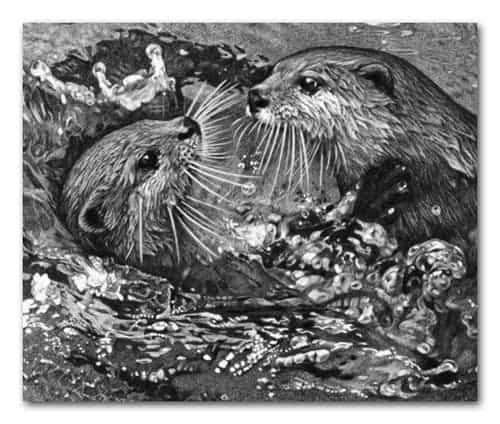 A detail from a drawing of two otters playing in water. All the highlights were created using a battery eraser