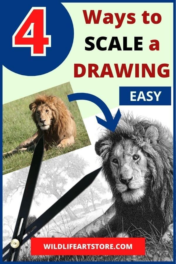 4 ways to scale a drawing image for pinterest. Lion photo, dividers, lion drawing.