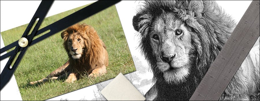scale your drawing in 4 easy ways feature image lion photo and lion drawing