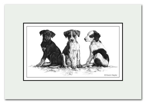Three puppies pet portrait, drawn in pencil by Kevin Hayler