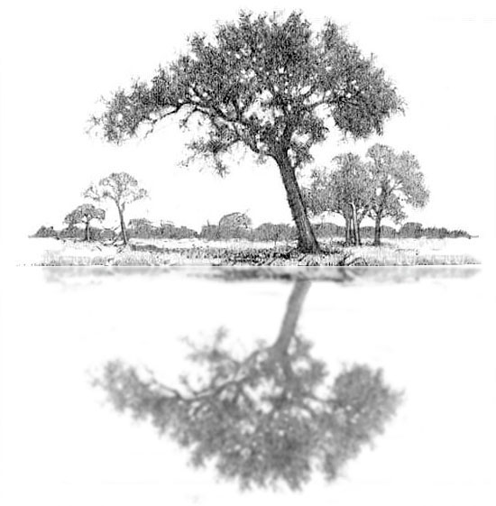How to draw water step 3. Adding the reflection of the main tree