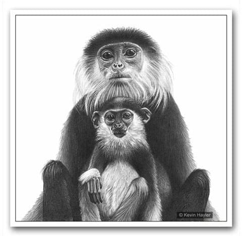 A drawing of a Douc Langur monkey and her baby sitting on her lap. Example image to show how repositioning a feature can add more interest