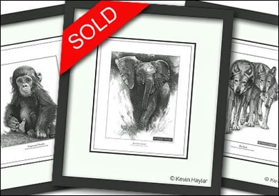 How to sell your art image . 3 framed drawings with a sold sticker