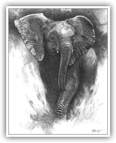 Baby elephant drawn using the lost and found technique to add interest to your drawing