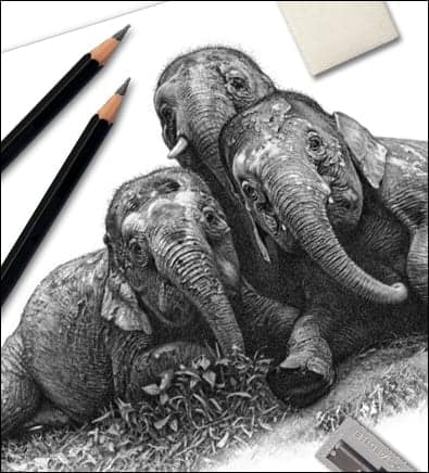 Drawing tips. An elephant drawing and pencils