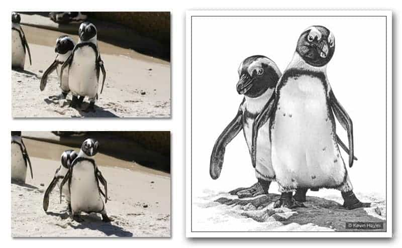 Penguin drawing showing the two reference photos used to construct an interesting composition