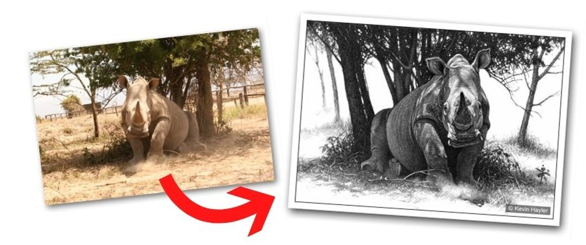 A white rhino drawing flipped and manipulated. Before and after image. Example of exaggerating perspective in a drawing