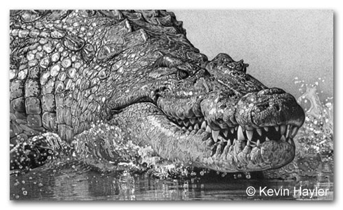 monster croc pencil drawing. 1st entry to an art competition