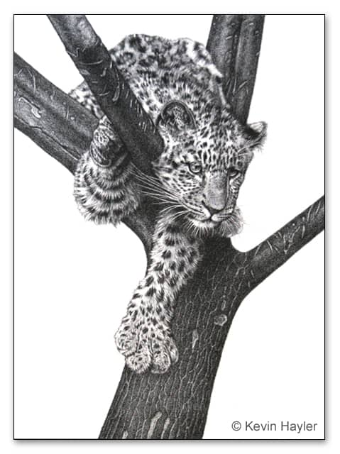 A wildlife drawing of a leopard cub in a tree