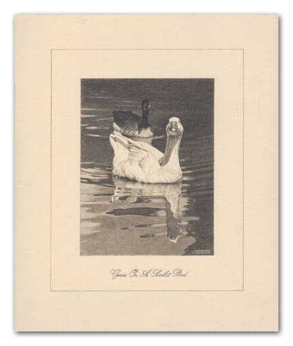 drawing of 2 geese with reflections on a still water pond