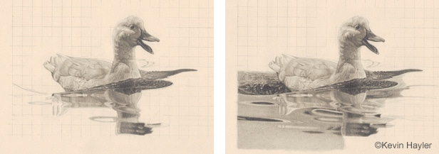 Dawing a duck on water steps 3 and 4. Draewing the water reflection and establishing the correct tonal values