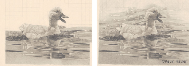 Dawing a duck on water steps 5 and 6. Drawing the elliptical shapes of rippling water and blending the gradients