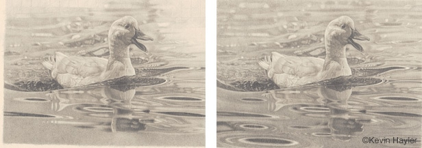 Dawing a duck on water steps 7 and 8. Blending and adjusting every water ripple. Sharpening the forground and softening the background
