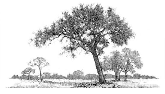 How to draw water step one. Drawing of trees in a landscape