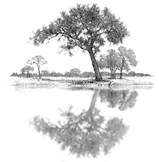 How to draw water step 4. Adding the 2nd clump of trees