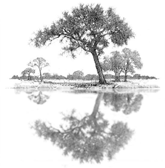 How to draw water step 5. Adding the furthest and last trees
