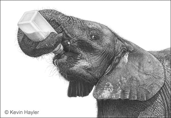 Hyperrealistic drawing of an elephant drinking from a bottle