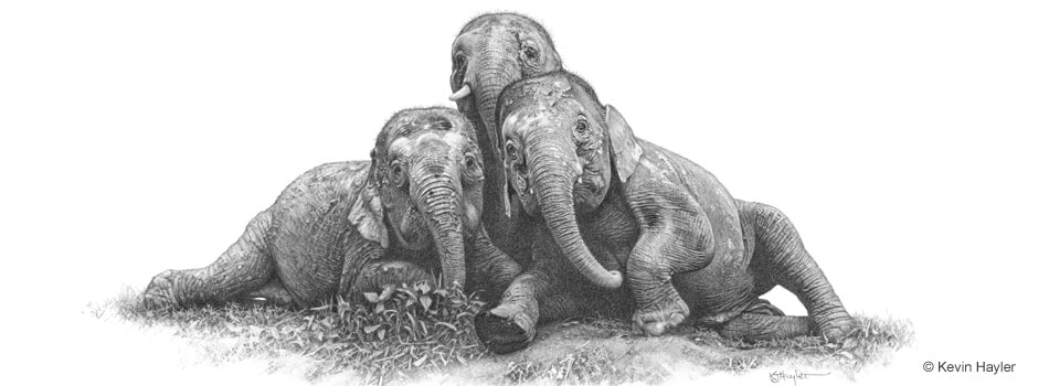 How to draw realistically image. Drawing of 3 realistic elephants