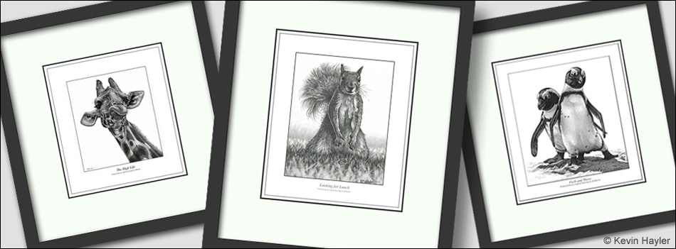 naming your art business header. Three framed drawings by Kevin Hayler