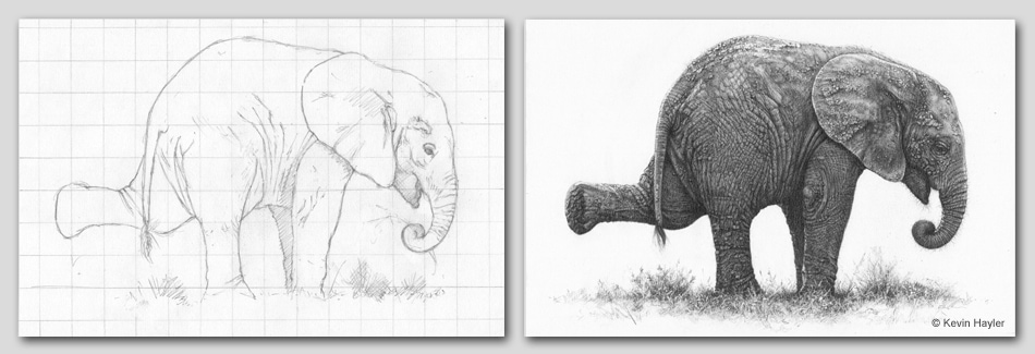 Baby elephant outline drawing and finished drawing header