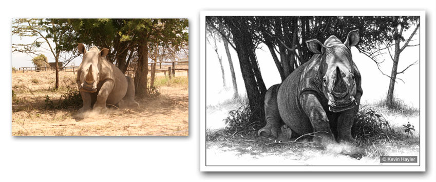 photorealistic drawing of a white rhino with the original reference photo